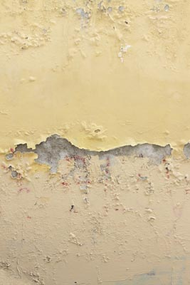 8 ways to beat mold in your health care facility